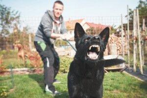 Hire A Rhode Island Dog Bite Lawyer